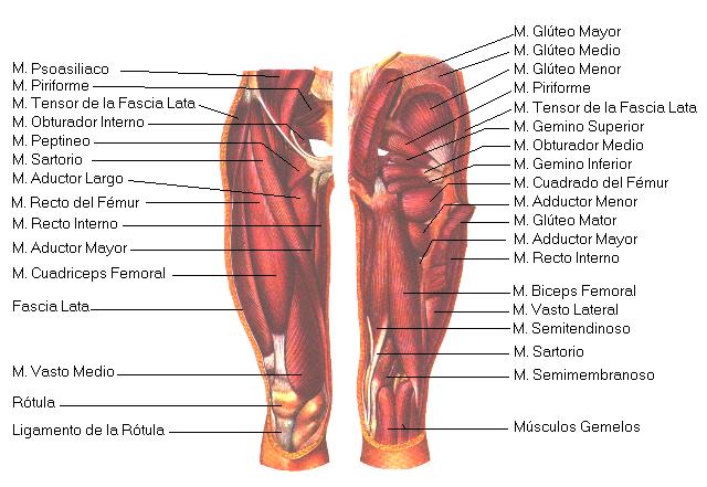C.A. Running Dead - Anatomía
